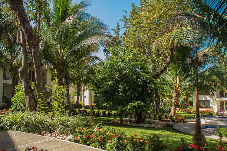 Oasis Tropical - Galería - Jardín